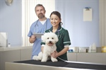 Continuing Education: Veterinary Assistant Course